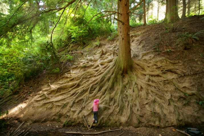 hillside of tree roots