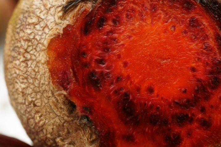orange beet macro